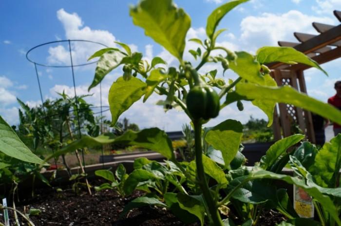 Busch Systems Community Garden