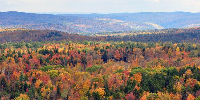Vermont_fall_foliage_hogback_mountain