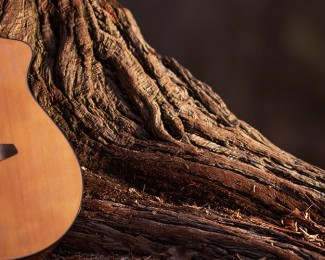 Wooden Acoustic Guitar and the Tree Music Concept Photo.