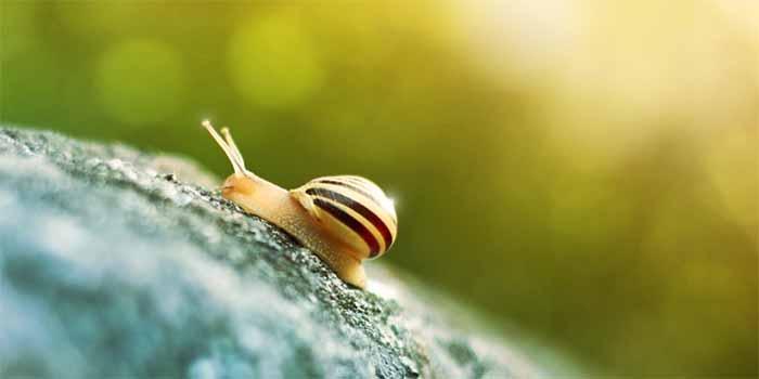 https://www.buschsystems.com/resource-center/images/uploads/library/slug.jpg