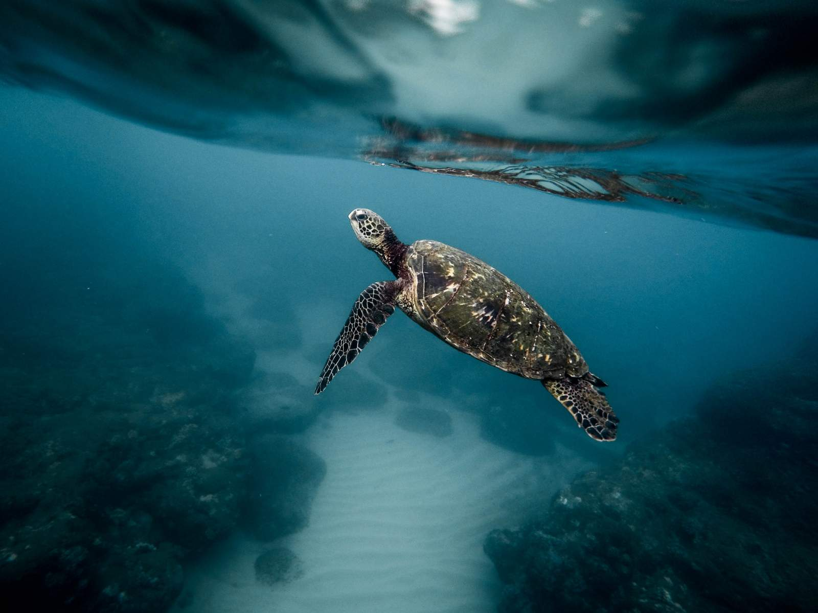 Climate Change: Vastly Changing the Sea Turtle Gender